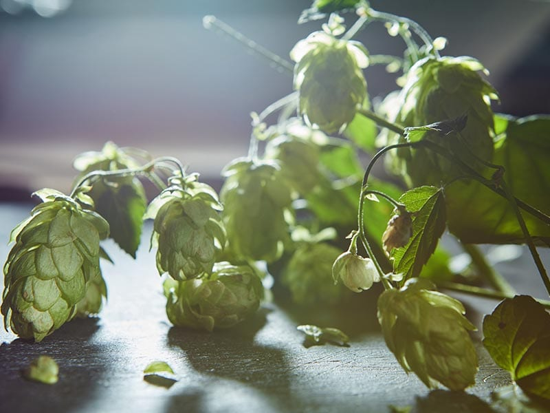 All About Hops 3